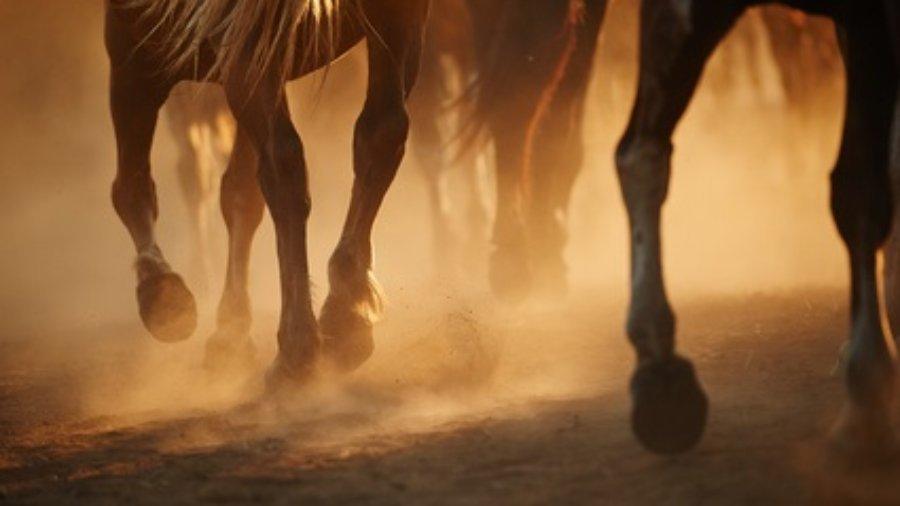 Pferdehufe galoppierend