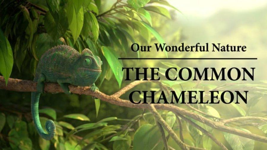 Animationsfilm ohne Worte – Chamäleon –